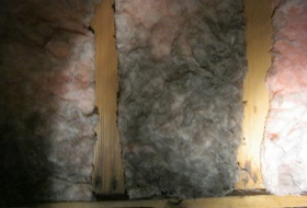 mould in roof insulation
