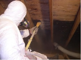 removing mould from wood