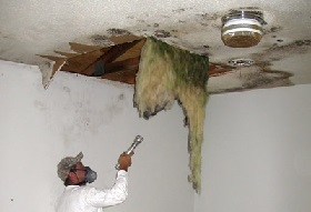 removing mould from ceiling 1